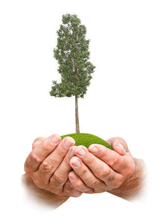 Photo pour tree in hands - image libre de droit