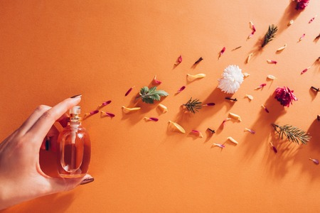 Photo pour Woman holding bottle of perfume with ingredients. Fragrance of flowers, spices, herbs and fir tree - image libre de droit