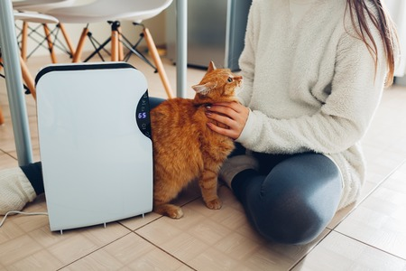 Photo pour Dehumidifier with touch panel, humidity indicator, uv lamp, air ionizer, water container works at home while woman playing with cat. Air dryer - image libre de droit