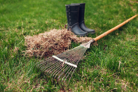 Cleaning lawn from dry grass with a rake in spring garden. Heap of grass with worker's boots and tool
