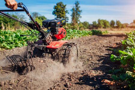 Foto de Farmer driving small tractor for soil cultivation and potato digging. Autumn harvest potato picking. Gathering fall crop in countryside - Imagen libre de derechos