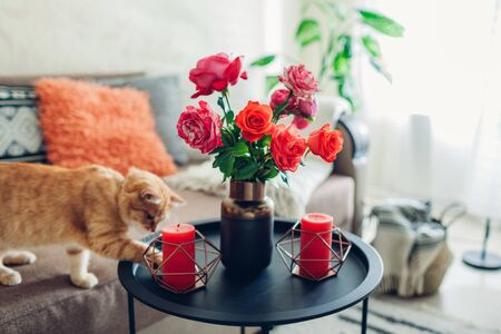 Photo pour Interior of living room decorated with flowers on coffee table and cat walking on couch and playing. Bouquet of colorful fresh roses - image libre de droit
