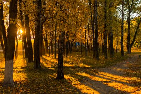 Photo pour autumn landscape. alley. - image libre de droit