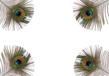 Iridescent eyes of four peacock feathers set at each of the corners of the frame. Set against a white background.