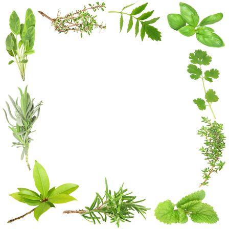 Organic herb border of bay leaves, lavender, sage, golden thyme, valerian, basil, coriander, common thyme, lemon balm, and rosemary. (Clockwise order) Set against a white background.