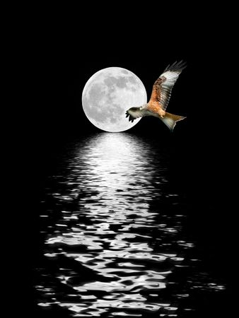 Red Kite eagle flying in front of a full moon at the Spring Equinox, with reflection in rippled water. Over black sky background.