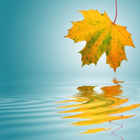 Foto per Maple leaf abstract in the colors of autumn with reflection over rippled water. Over a turquoise background with white central glow. - Immagine Royalty Free