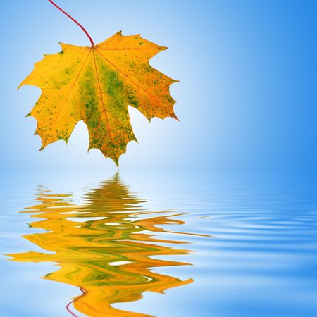 Photo pour Maple leaf abstract design in autumn colors with reflection over rippled water. Over sky blue background with white central glow. - image libre de droit