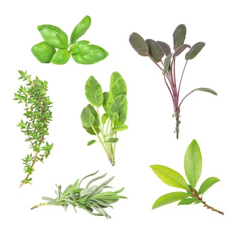 Herb leaf selection of basil, purple sage, common thyme, variegated sage, lavender and bay, over white background.