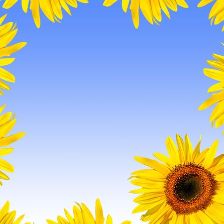 Sunflower abstract frame design. Over blue background with white glow.