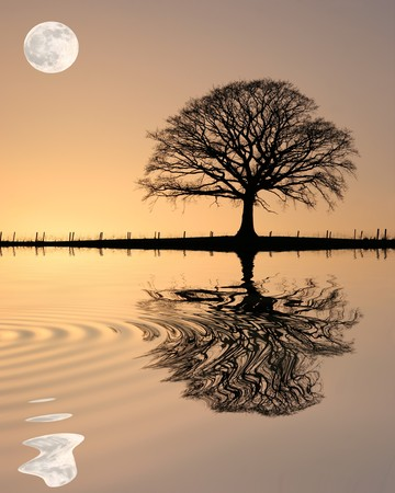 Photo pour Oak tree in winter at sunset in silhouette against a golden sky and full moon with reflection over rippled water. - image libre de droit