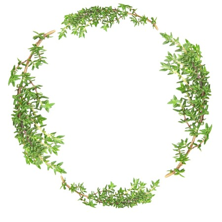 Garland of thyme herb leaf sprigs over white background.