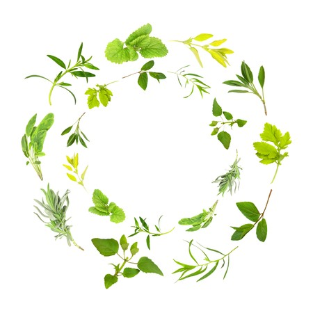 Herb leaf circles of lemon balm, golden marjoram, sage, feverfew, chocolate mint, tarragon,  bergamot, lavender, variegated sage, hyssop over white background. In clockwise order from top outer circle.