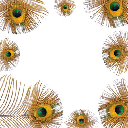 Burnished golden peacock feathers creating a framed border over white background.