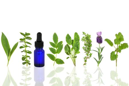 Herb leaf selection of comfrey, peppermint, valerian, sage, thyme, lavender and lemon balm with an aromatherapy essential oil glass dropper bottle, over white background.