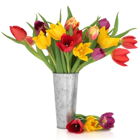 Tulip flowers in rainbow colours in a distressed aluminum vase and loose isolated over white background.