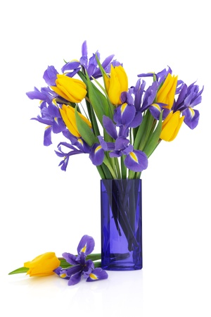 Iris and yellow tulip flower arrangement in a blue glass vase and loose isolated over white background.