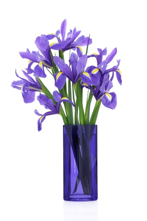 Iris flower arrangement in a blue glass vase isolated over white background. Blue flag variety.