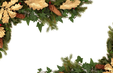 Christmas border of holly, ivy, pine cones, golden oak leaves and blue spruce fir leaf sprig isolated over white background.の写真素材