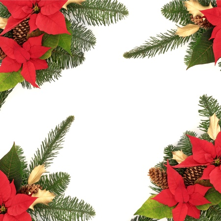 Christmas decorative border of poinsettia flower heads, golden holly, pine cones and spruce fir leaf sprig isolated over white background.