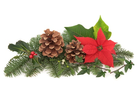 Christmas decoration of mistletoe, holly with berries, poinsettia flower, ivy, pine cones and spruce fir leaf sprig isolated over white background.