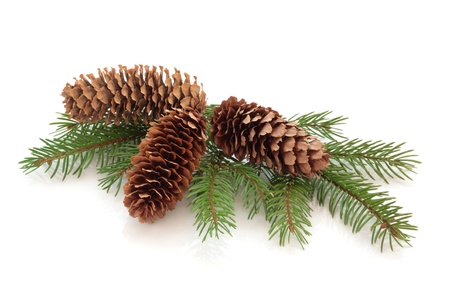 Christmas decoration of pine cone group with conifer fir leaf sprig isolated over white background.