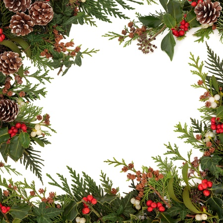 Winter and christmas  traditional border of holly, ivy, mistletoe and cedar cypress leaf sprigs with pine cones over white background の写真素材
