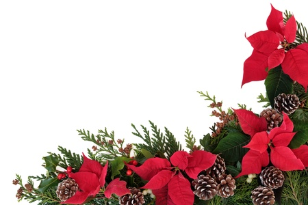 Christmas decorative border of poinsettia flower heads, holly, ivy, mistletoe and cedar leaf sprigs with pine cones over white background