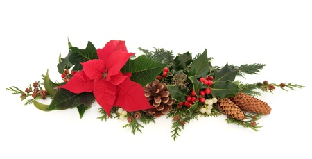 Christmas decorative floral arrangement of a poinsettia flower, holly, mistletoe,  ivy and cedar cypress leaf sprigs with pine cones over white background