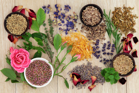 Herbal medicine selection also used in pagan witches magical potions over oak background