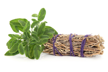 Smudge stick with fresh sage leaf sprigs over white background