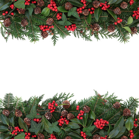 Winter and christmas floral background border with holly, ivy, mistletoe, spruce fir and pine cones over white.の写真素材