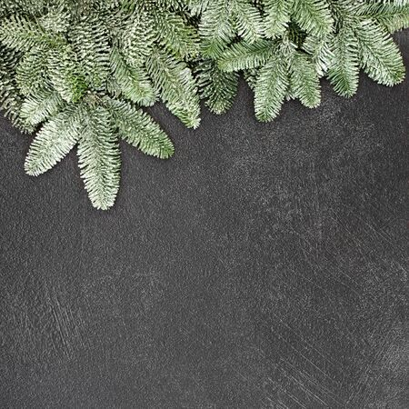 Photo for Winter and Christmas background border with snow covered spruce fir on grunge grey background with copy space. - Royalty Free Image