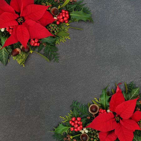 Photo for Poinsettia flower border with winter flora of holly, cedar and ivy leaves, mistletoe and acorns on grunge grey background. Festive theme for Thanksgiving and Christmas. - Royalty Free Image