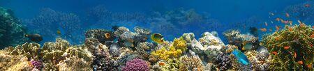 Photo pour Underwater world. Coral fishes of Red sea. Egypt - image libre de droit
