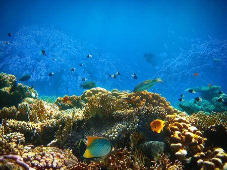 Foto de Underwater world. Coral fishes of Red sea. Egypt - Imagen libre de derechos