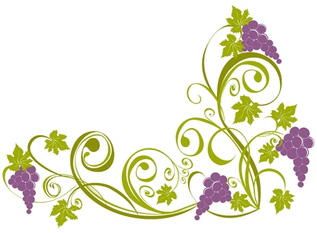 Grapevine isolated on a white. Wine design elements