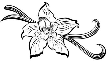 Illustration pour Vanilla pods and flower  - image libre de droit