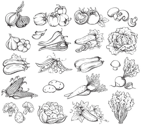 Hand Drawn Vegetables Set.  Collection of  Vegetables sketch. Vector illustrationのイラスト素材