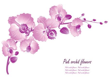 Flower orchid. Vector illustration