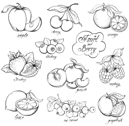 Illustration pour Collection of hand drawn Fruits and Berries isolated on white background. Vector vintage sketch style illustration. - image libre de droit