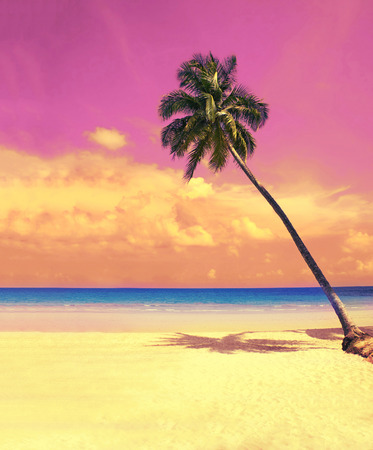 Photo for Paradise nature, palm tree over white sand beach on the tropical beach. Summer travel background with retro vintage filter. - Royalty Free Image