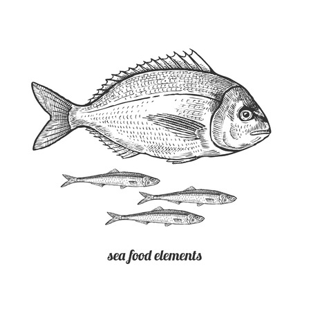 Illustration pour Dorado fish and anchovies. Seafood. Vector illustration. Isolated image on white background. Vintage style. Hand drawn seafood image. - image libre de droit