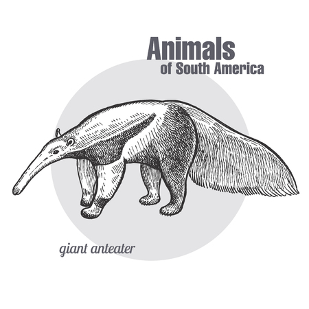 Illustration pour Giant anteater hand drawing. Animals of South America series. Vintage engraving style. Vector illustration art. Black and white. Object of nature naturalistic sketch. - image libre de droit