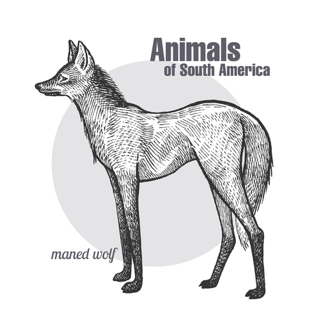 Illustration pour Maned Wolf hand drawing. Animals of South America series. Vintage engraving style. - image libre de droit
