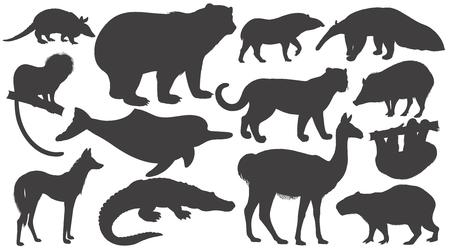 Illustration pour Black silhouettes animals of South America on white background set. Vector illustration art. Bear, battleship, tamarin, wolf, dolphin, lama, jaguar, anteater, peccary, sloth, tapir, capybara, caiman. - image libre de droit