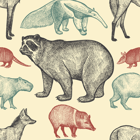 Illustration pour Seamless pattern with animals South America. Spectacled Bear, Peccary, Capybara, Armadillo, Maned Wolf, Anteater on pastel background. Vector illustration art. Black, red,blue. Vintage engraving. - image libre de droit