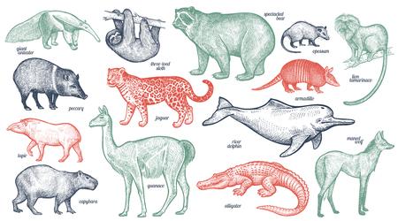 Illustration pour Animals with names set. Bear, battleship, tamarin, wolf, dolphin, lama, jaguar, anteater, peccary, sloth, tapir, capybara, caiman. Vector illustration. Red, green, black isolated on white background. - image libre de droit