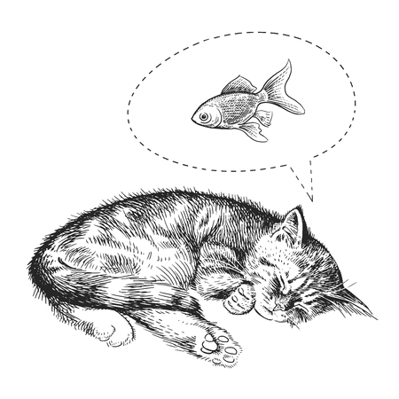 Illustration pour Cute kitten sleeps dreams of goldfish. Home pet isolated on white background. Sketch. Vector illustration art. Realistic portrait of animal style vintage engraving. Black and white hand drawing of cat - image libre de droit