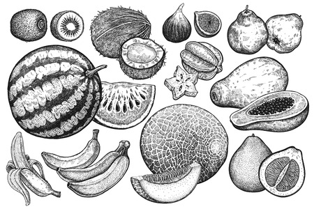 Illustration for Isolated fruit set. Watermelon, melon, kiwi, coconut, papaya, pomelo, bananas, quince, fig and carambola. Black and white. Vintage vector illustration art. Realistic hand drawing. - Royalty Free Image